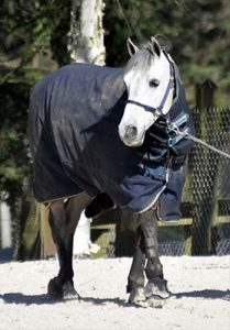 Hippoclean-35-couvertures-chaval